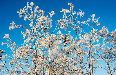 frozen-winter-grasses-2-2