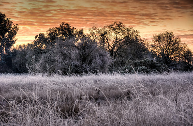 frozen-field-sunrise-1