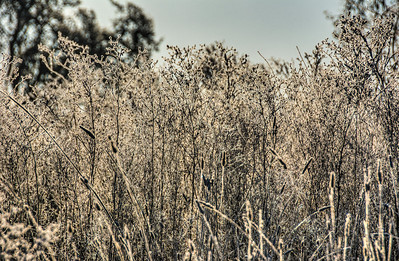 frozen-winter-grasses-2-1