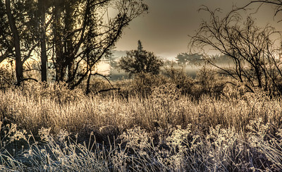 frozen-winter-field-2