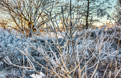 frost-frozen-field-2