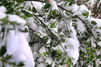 Dec 2009 Snowfall