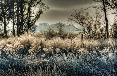 frosty-winter-field-2-2