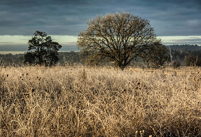 winter-field-tree-5