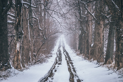 Walk through Winter