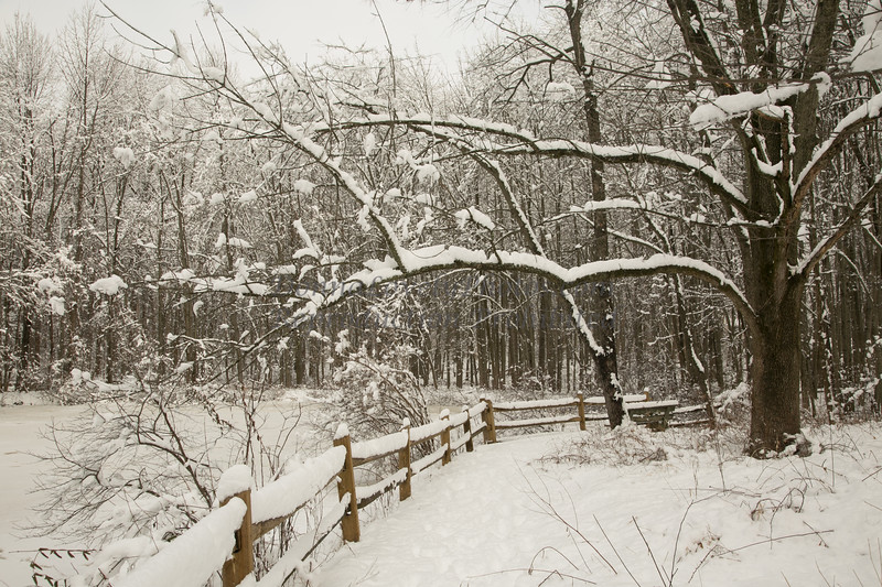 winter, heavy snow 2-4-14©DonnaLovelyPhotos com-3964