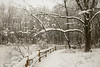 winter, heavy snow 2-4-14©DonnaLovelyPhotos com-3964