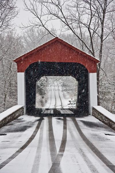 snow-7239