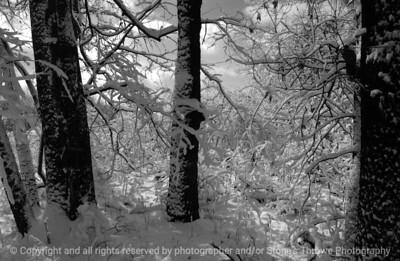 015-winterscape-wdsm-26feb07-bw-0544