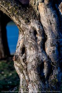 015-tree-ankeny-05dec19-08x12-008-400-4711