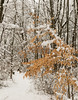 winter, heavy snow 2-4-14©DonnaLovelyPhotos com-3970-3