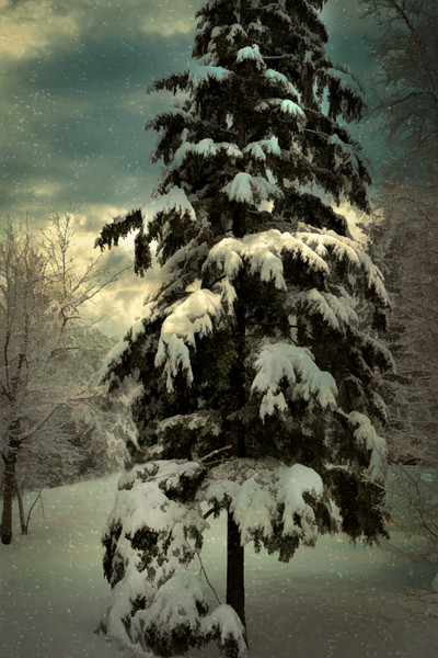 Winter Reverie