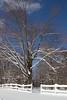 Snow on Larkspur Lane 1-27-11-9702
