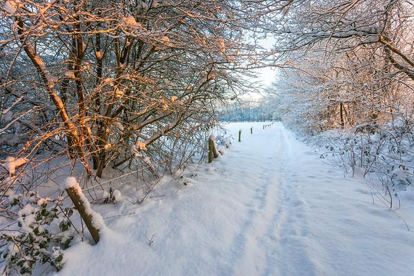 Winter Charm PB1500.2009