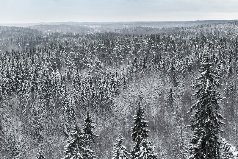 Finnish wilderness