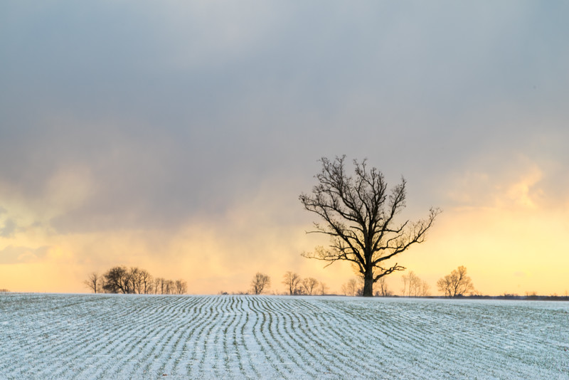 Tree and Clouds in Winter