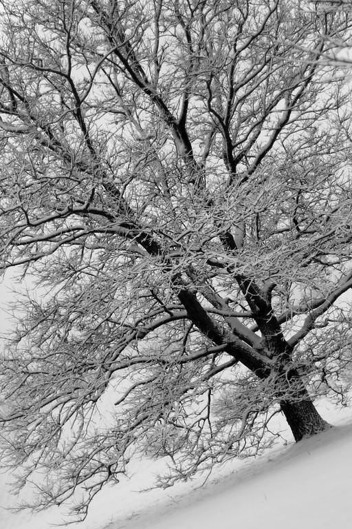 """""""winter at an angle"""""""
