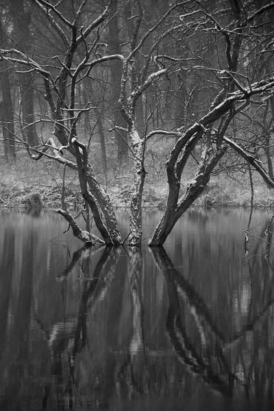 """winter reflection"""