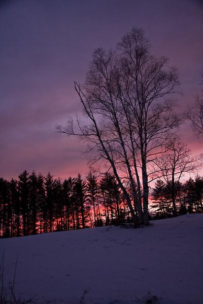 Trees in Winter Dusk