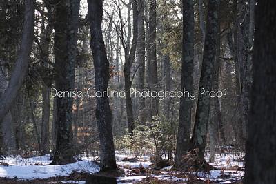 North Winter Woods