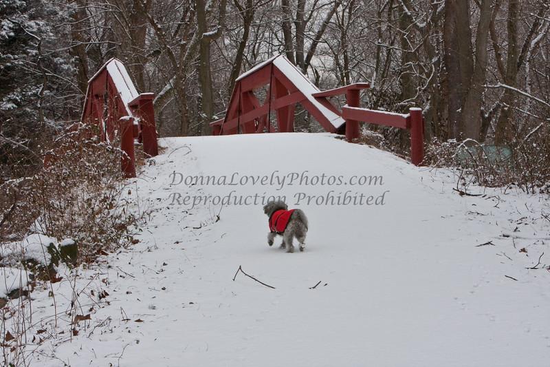snowy WashingtonXngPk-6629