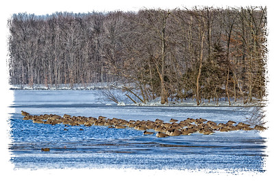 Framed Winter Geese on Frozen Lake