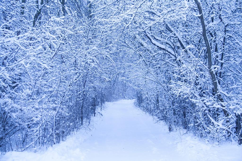 """winter path"""