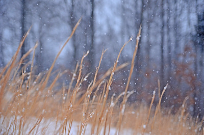Snow on Little Bluestem