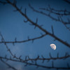 Moon of the Budding Trees