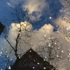 Spring Awakenings - World in a Puddle