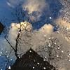 Spring Awakenings - World in a Puddle