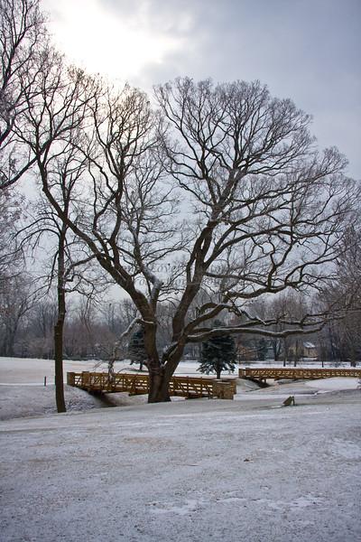 snow-7164