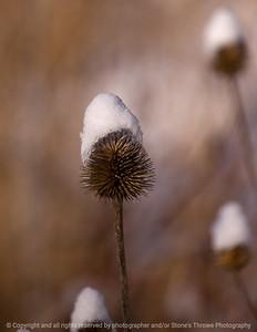 015-botanical_winter-wdsm-10jan09-cvr-1142
