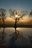 Foggy SunriseThru Tree&Reflection_12-13-20_9600©DonnaLovelyPhotos com -9600