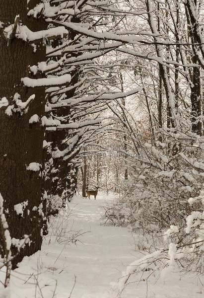 winter, heavy snow 2-4-14©DonnaLovelyPhotos com-3975-3