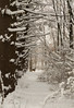 winter, heavy snow 2-4-14©DonnaLovelyPhotos com-3975-3