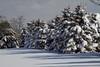 Snow on Larkspur Lane 1-27-11-9709