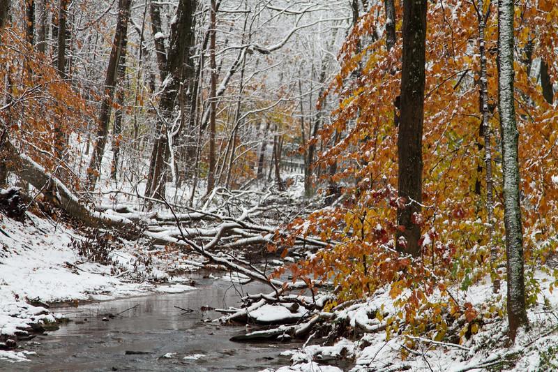 snow and winter, Bucks County, PA_ 11-12_DonnaLovelyPhotos com-8657