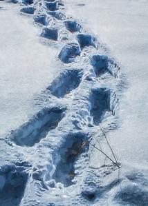 Snow Shoe Tracks