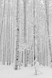 winter 2009 24 - Version 2