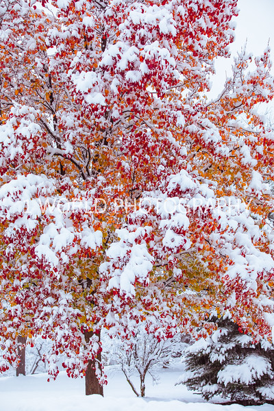 First Snow of Season Dec 16-12.jpg