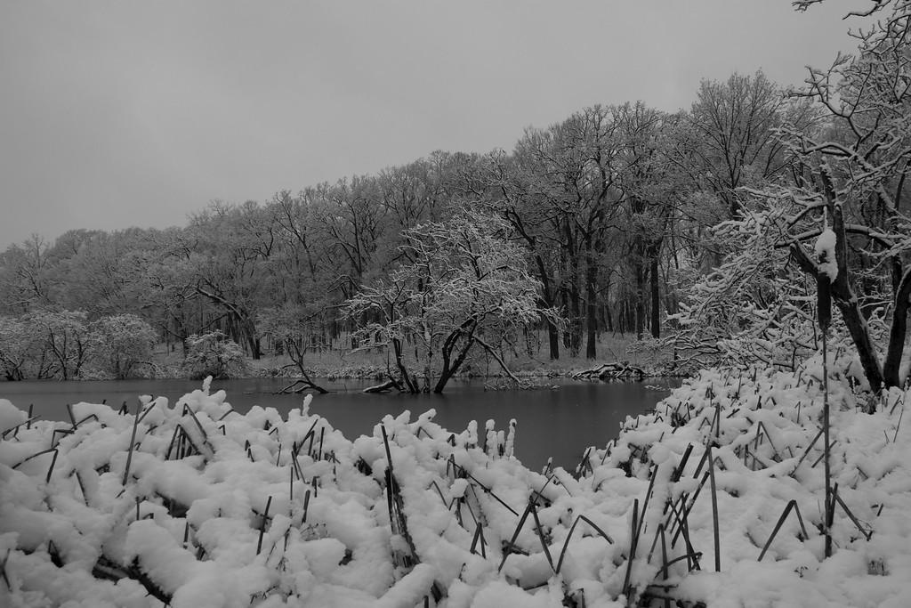 """winter pond"""
