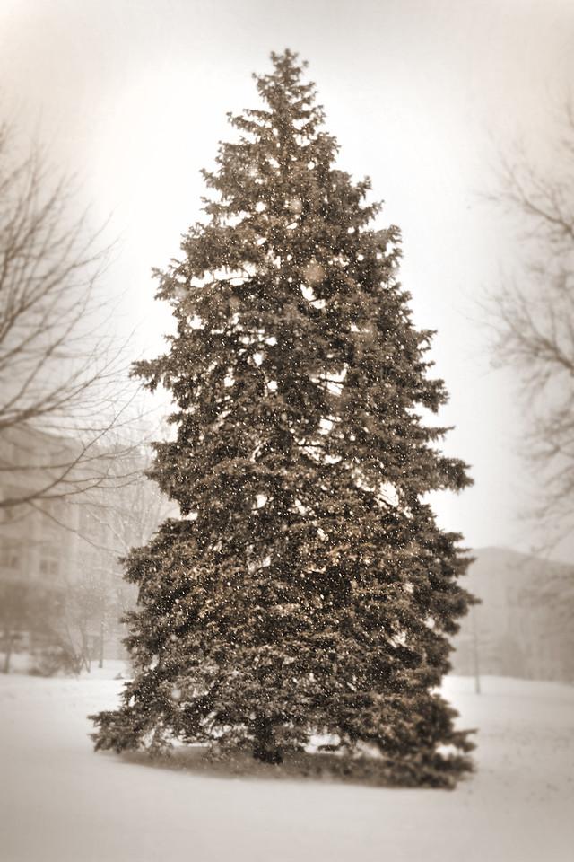 Campus_winter tree_Sepia 2015_3111_2