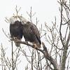 Eagle Kiss