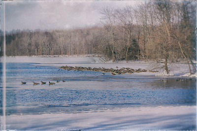 Winter:  Geese on Frozen Lake