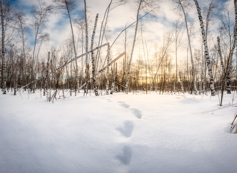 Follow The Deer Tracks  To The Sunrise