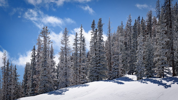 Frosted Trees at Monarch Pass