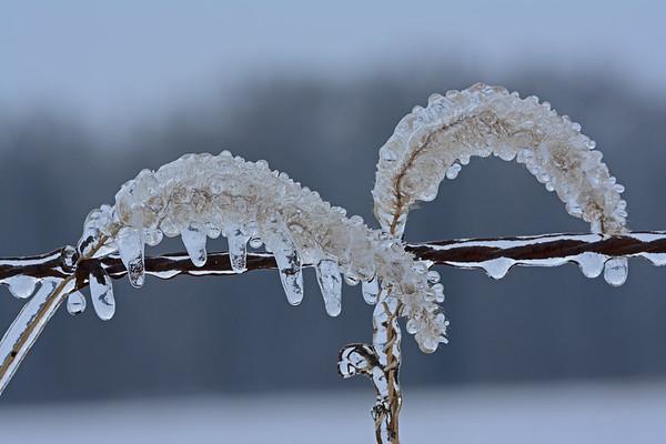 Icy Fence Row