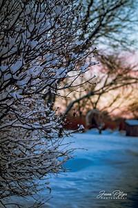 Bush in winter