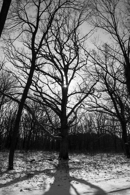 """bare tree"""